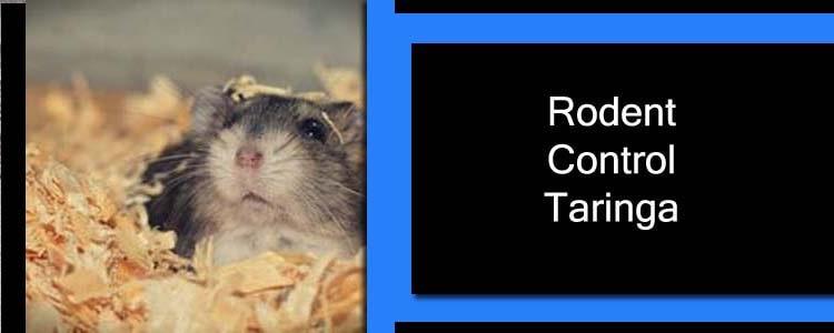 Rodent Control Taringa